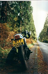 Yamaha RD250LC (Old.shots) Tags: old uk november blue autumn trees england white classic bike giant britain w great shed retro motorbike yamaha 1998 lc avenue 1980 berkshire banger reg elsie sequoia rd 250 1860 tallest wokingham finchampstead wellingtonia rd250lc