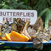 "Butterfly Conservatory • <a style=""font-size:0.8em;"" href=""http://www.flickr.com/photos/25269451@N07/15392802761/"" target=""_blank"">View on Flickr</a>"