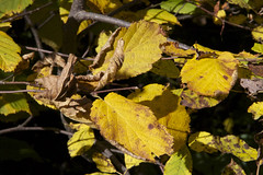 """AutumnLeaves06 • <a style=""""font-size:0.8em;"""" href=""""http://www.flickr.com/photos/128355808@N08/15406281865/"""" target=""""_blank"""">View on Flickr</a>"""