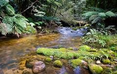 Baw Baw creek (laurie.g.w) Tags: mountain fern creek moss stream mt victoria cascade thompson gippsland baw tributary