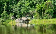 Maya Biosphere Reserve_RBM (123) (cipecguatemala) Tags: fauna del america mono fisherman flora maya guatemala centro reserve sunsets biosphere estacion monkeys hummingbirds jaguar atardeceres laguna araa tigre jaguars reserva peten monos biologica biosfera rbm colibris guacamayas