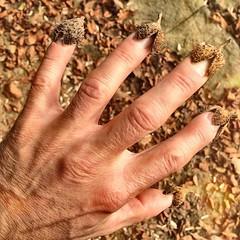 Die Herbstkrankheit. | Autumn-illness. #Herbst #autumn #igfun #instafun #ignice #kiraton #kiratontravel #buchecker #beechnut #hand