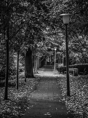 fall in the city (mahohn) Tags: bw fall monochrome leaves deutschland hamburg laub blätter 34 canonpowershotsx220hs