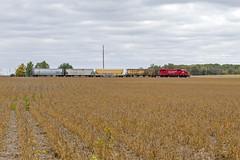 CP 4421 - Rochester Local (John Fladung) Tags: railroad train local farmfield emd fallharvest fallfield emdgp382 rochesterlocal