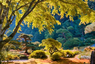 Japanese-Garden2590