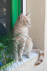 Wilfred watching the birds (carmenrizo) Tags: naturaleza nature beauty ilovemycat catcloseup catseyes ilovecats beautifulcats youngcats nosecats gatosdelmundo gatosdeflickr