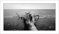 Path to infinity (Christian_from_Berlin) Tags: wood longexposure sea blackandwhite fog germany deutschland coast infinity sony horizon balticsea baltic insel driftwood 200 fav rügen magical ostsee treibholz 200fav 300fav rügenisland germanyholiday 250fav sonycompactcamera saariysqualitypictures 200v200c2000v sonyrx100 sonydscrx100m2 sonyrx100m2 infinitexposure