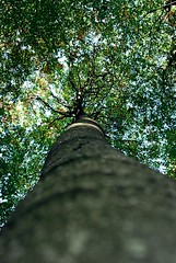 looked up in the sky... (NicoleLovesPictures) Tags: trees tree nature lookup wald bltter bume baum nikond80 aufsehen