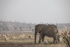 Elephant with baby (guido.menato) Tags: elephantwithbaby elephant uganda africa afrika wildlife kidepo murchinson falls park safari nature animals