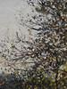PISSARRO Camille,1897 - Matinée d'Automne, Femme dans un Verger, Eragny (Orsay) - Detail 106 (L'art au présent) Tags: art painter peintre details détail détails detalles painting paintings peinture peintures peinture19e 19thcenturypaintings tableaux orsay museum paris france îledefrance camillepissarro camille pissarro impressionnisme impressionism matinéedautomne eragny paysage landscape collines hills hill trees tree arbres nature maisons houses house champs fields field champ ferme farm roof roofs wood pré meadow coucherdesoleil crépuscule été summer sunset dusk twilight soleil sun peasants paysans paysan agriculture peasant people work travail labour labeur foliage arbre feuillage verger