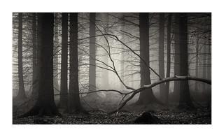 darkwoods14