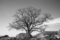 Gettysburg National Military Park [02.19.2017] (Andrew H Wagner | AHWagner Photo) Tags: 5dmk3 5d3 5dmkiii 5dmarkiii 5dmark3 canon eos 35l 35mm f14 f14l blackandwhite bw blackwhite desaturated desaturate monochrome nature trees tree outdoors explore exploration exploring pa pennsylvania winter landscape gettysburgnationalmilitarypark nationalmilitarypark nationalpark gettysburg