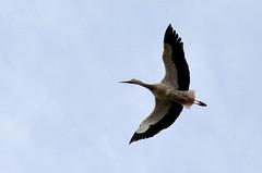 Bruchsal: Saalbachwiesen (infactoweb) Tags: bruchsal saalbachwiesen wiese saalbach vogelparadies storch wandern kraichgau infactoweb