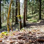 Hohe Wand, Steigerl(vor)hüpfen thumbnail