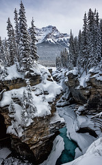 The Contrasts of Winter (Kristin Repsher) Tags: canada canadianrockies rockies rockymountains jasper jaspernationalpark winter waterfall frozen canyon gorge snow pinetrees mountains alberta athabascafalls