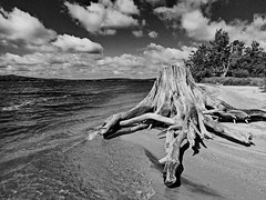 Drift wood and High Seas (Mountain Visions) Tags: adirondacks adk adirondack paddling hiking newyorkstate stillwater lake flow reservoir beach shoreline foreverwild wilderness monochrome blackwhite