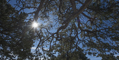 Under a tree (OranK7) Tags: light sun sunlight tree branch star sharp cover nature plant