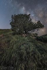 Galactic tree (wandering indian) Tags: milkyway sunrise stars astrophotography nightphotography kedardatta bayarea california landscape beacheslandscapes travel nature water trees nikond810