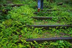 森林步道 (momodie81) Tags: 馬武督 探索 森林 步道 陰天 台灣 新竹 關西