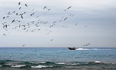 Lake Scene (imageClear) Tags: waves water lake speedboat boat flock gulls lakemichigan aperture nikon d500 80400mm imageclear photostream flickr