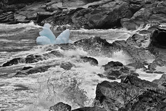 Shore at Pouch Cove 5 (selective colour) (LongInt57) Tags: ice iceberg floating water sea ocean waves crashing splashing action motion rock shore seashore landscape bw monochrome selectivecoloring selectivecolouring blue black white grey gray nature pouchcove newfoundland canada