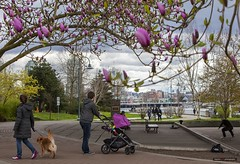 Pink Parenting (Clayton Perry Photoworks) Tags: vancouver bc canada spring flowers people falsecreek