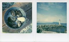 Polaroid Week, Day 2, Photo 1 (brookem_danno) Tags: poladiptych polaroidweek diptych oysters taylorshellfishfarms 600 impossibleprojectfilm sonaronestepcloseup