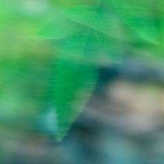Blowin' in the Wind (j.towbin ©) Tags: allrightsreserved© blur macro leaf motionblur img2803version2 intentionalblur incamerablur motion breeze