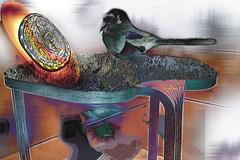 La urraca (seguicollar) Tags: imagencreativa photomanipulación art arte artecreativo artedigital virginiaseguí mesa cara cabeza moneda pájaro urraca hierba surrealismo surreal surrealista