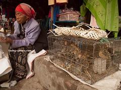 Luck Birds For Sale in Kentung, Myanmar, 2016 (deemixx) Tags: myanmar burma kengtung market cagedbirds songbirds luckbirds