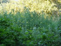 Ψίνθος (Psinthos.Net) Tags: ψίνθοσ psinthos spring april απρίλησ απρίλιοσ άνοιξη φύση εξοχή nature countryside afternoon απόγευμα απόγευμαάνοιξησ ανοιξιάτικοαπόγευμα psinthosvalley valley κοιλάδα κοιλάδαψίνθου κοιλάδαψίνθοσ bramble βάτοσ φύλλα leaves branches greens χόρτα κλαδιά άγριαλουλούδια αγριολούλουδα wildflowers flowers λουλούδια άνθη blossoms yellowflowers κίτριναλουλούδια λάζαροι λαζάροι lazarus whiteblossoms λευκάάνθη λευκάλουλούδια whiteflowers άσπραλουλούδια πρασινάδα greenery βάτοι βάτα brambles