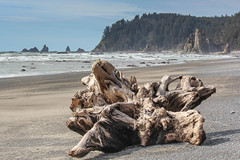 Wood on the beach (Oleg S .) Tags: olympic travel usa washingtonstate beach deadwood nature sea tree water wood