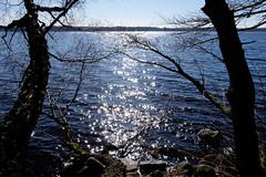 Sunny lake (Håkan Dahlström) Tags: 2017 lake photography skåne sunlight sunshine sweden tree munkaljungby skånelän xt1 f13 1350sek xf1855mmf284rlmois cropped 1026032017143350 ängelholmn se