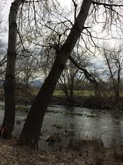 IMG_0596 (augiebenjamin) Tags: lakeviewparkway lakeshoredrive provo utah mountains provorivertrail trees spring winter spanishfork nebo bicentennialpark oremcity provocity utahvalley utahcounty oremarboretum