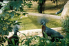 F1000012_lr (chi.ilpleut) Tags: singapore 2017 myday march outdoor outing film ilovefilms shootfilm kodakfilm expiredfilm jurongbirdpark birds seeing greenery ilovegreen analogue analog track grain