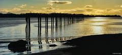 Silhouettes of old Pylons and Posts - Cannery Channel (SonjaPetersonPh♡tography) Tags: richmond steveston pylons posts cannerychannel fraserriver southarm river water channel canneryrow heritage britishcolumbia canada riverfront beach sunset silhouettes waterscape seascape reflections