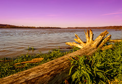 Sunset on the Ohio River (Brandon Westerman WNP) Tags: nature sunset spring ohio river kentucky driftwood landscape tree green natureandnothingelse