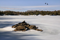 Looking For Open Water (Lindaw9) Tags: shanty bay ice rock treeline canada geese northern ontario lake shadows