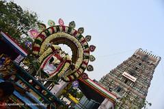 Marundheeswarar Temple   _ Panguni Utsavam 2017 (Kapaliadiyar) Tags: kapaliadiyar marundheeswarar temple adhikaranandhi thiruvanmiyur