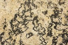 tar in the rock (dustaway) Tags: sandstone bungawalbincatchment bungawalbinnationalpark bungawalbinforest richmondvalley northernrivers nsw nature australia tar bitumen clarencemortonbasin geology
