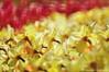 Meeting of the Lilly and Tulip (NATIONAL SUGRAPHIC) Tags: türkiye yenitürkiye newturkei turkei naturephotography doğafotoğrafçılığı mothernature annedoğa fairytales sarıyer istanbul emirgan emirgankorusu tulips laleler türkiyeninlaleleri tulipsofturkei tulipland flowers çiçekler ayhançakar nationalsugraphic sugraphic emirganparkı