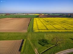 yellow + blue = green (Kerriemeister) Tags: drone aerial photography phantom phantom3 dji pro fields below tree shadow yellow crops