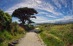 west coast tauranga bay 9 (Bilderschreiber) Tags: cape fowlwind walkway foulwind tree baum wolken clouds sky himmel west coast küste westcoast neuseeland newzealand southisland südinsel wideangle wide angle weitwinkel