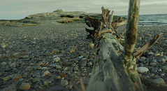 Drift Wood 2 (William Chils) Tags: beach sea wood drift cold water stones rocks sand waves awesome gloomy