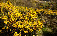 1920p 72dpi-7196 (reach.richardgibbens) Tags: bowland lancashire england uk littledale fell moorland moor valley dale