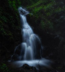 secret falls... (Alvin Harp) Tags: waterfalls shastanationalforest i5 northerncalifornia california longexposure le naturesbeauty darkforest forest springrunoff spring april 2017 sonyilce7rm2 fe41635zaoss alvinharp
