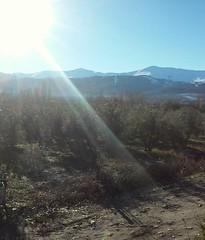 Olivos y nieve (Manuel Contreras (Padre)) Tags: nieve olivos sierranevada campo paisaje rayosdesol