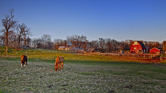Iowa farm (wdterp) Tags: sunset horses barn farm goldenhour
