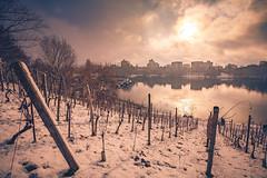 Seepark in Freiburg (simonpe86) Tags: weinberg sun wineyard city landscape plantage breisgau sonne water freiburg stadt seepark lake landschaft schwarzwald freiburgseepark