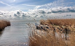 Kubitzer Bodden (Wunderlich, Olga) Tags: rügen insel boot wasser himmel wolken reed schilf licht landschaft natur landschaftsbild naturaufnahme deu mecklenburgvorpommern